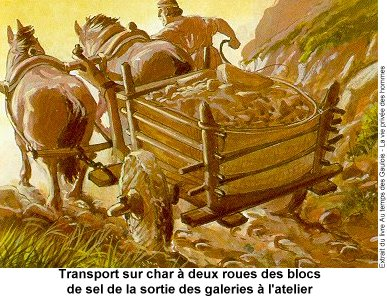sel-transport1b.jpg